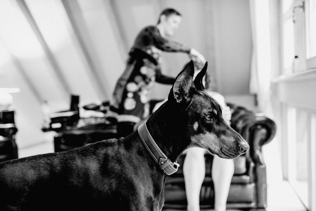 Dobermann Mogli Hund groß Stylistin Braut Styling Make-up