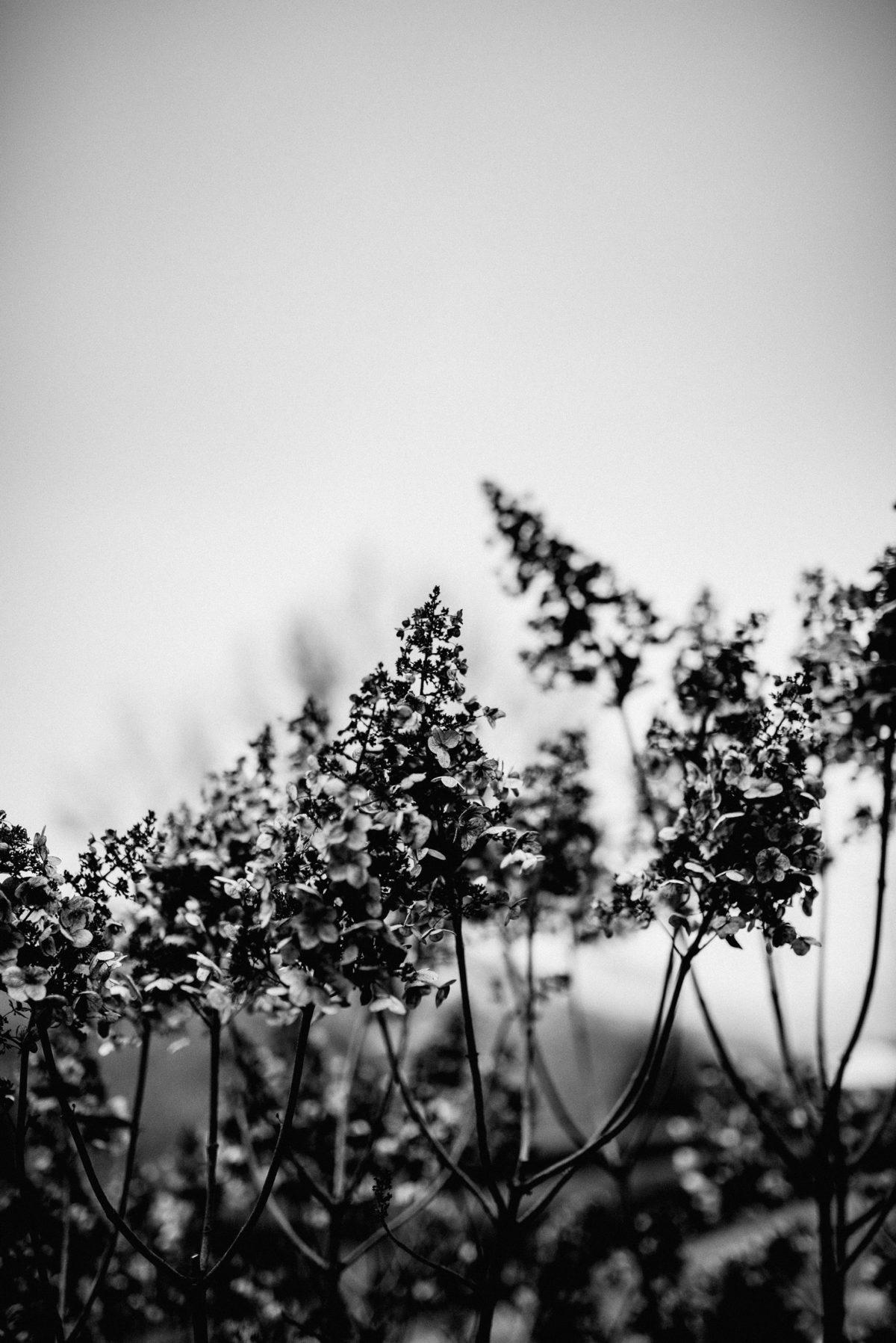 Blumen schön schwarz weiß Himmel Winter Hochzeit