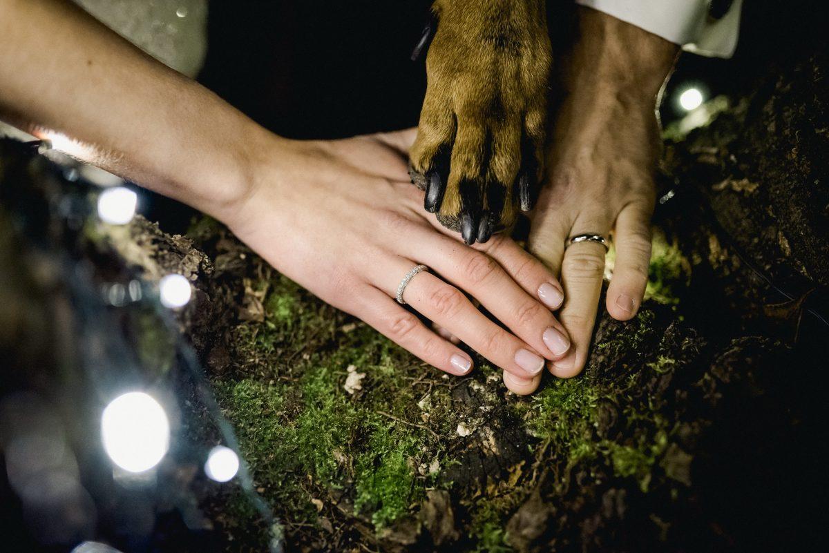 Bündnis Hund Hände Liebe Ringe Familie Ehe Dobermann Hochzeit