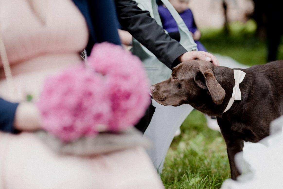Labrador Nemo Schleife süß Kleid Blumen Rosa Pink Braun Hund Haustier streicheln