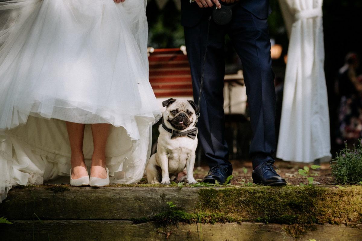 Lackschuhe,Hochzeitsschuhe,Mops,Füße,Hund,Gruppenbild