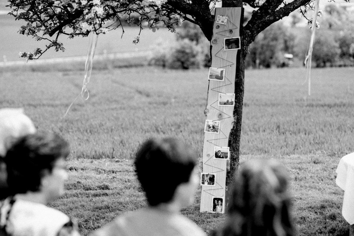 Holzbrett,Polaroidbilder,Erinnerung,Pfad,Baum