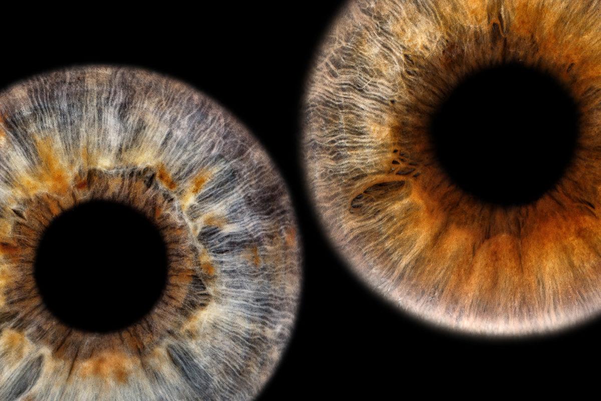 Valentinstag Besonderes Geschenk Überraschung Irisbilder Iris Fotografie Irisfotos Rosen Augen Aussergewöhnlich