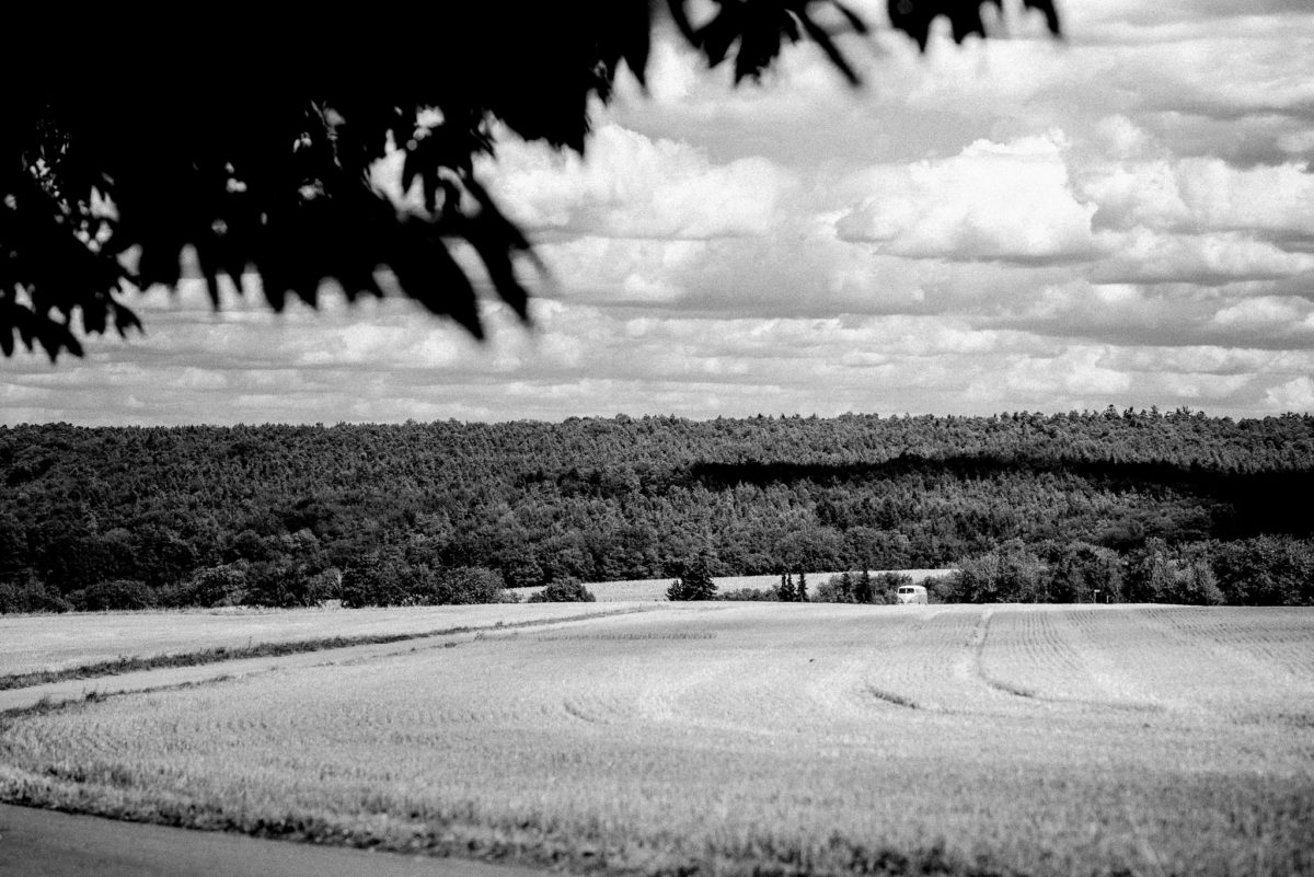 Feld, Wolken, schwarzweiß, Wald, Bäume, Baum, Feldweg, Natur