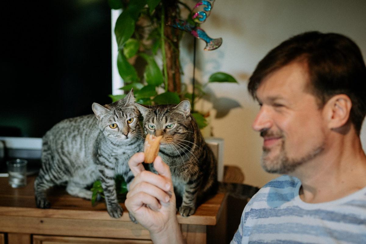 Katzen, Grinsen, Futter, Essen, grüne Augen, organe Augen, Tiger, getigert, Pflanze